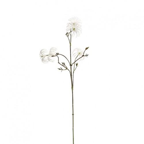 Schnee-Clematis mit 5 Blüten